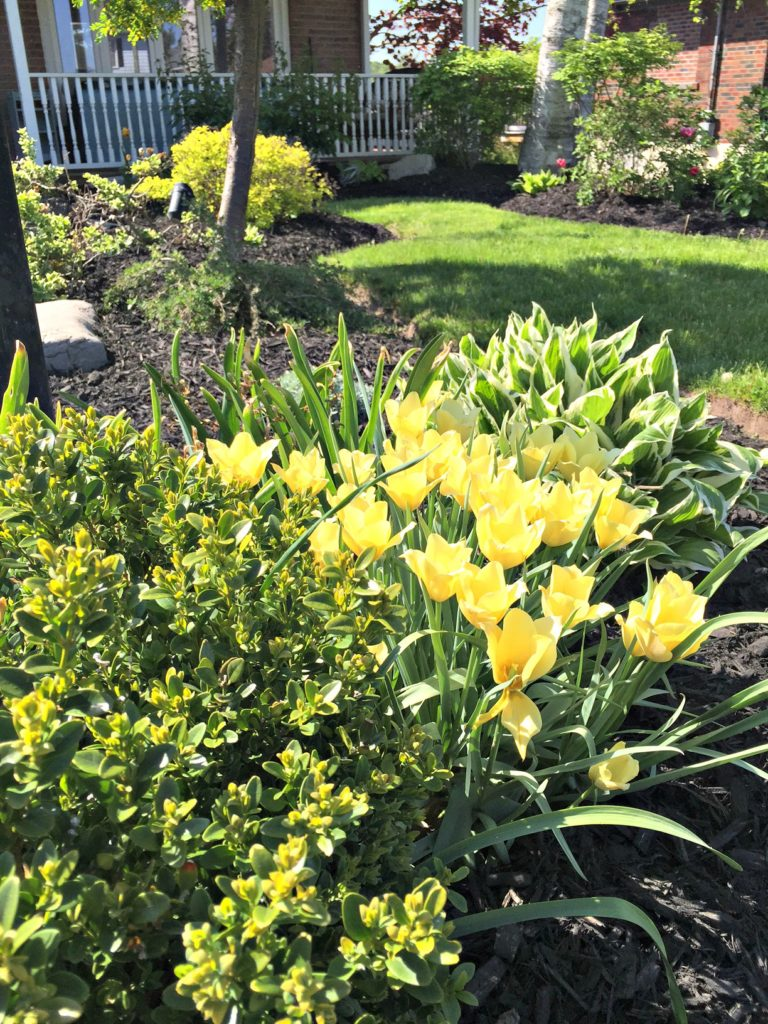 Outdoor Garden Decor and how to freshen up your perennial garden for spring